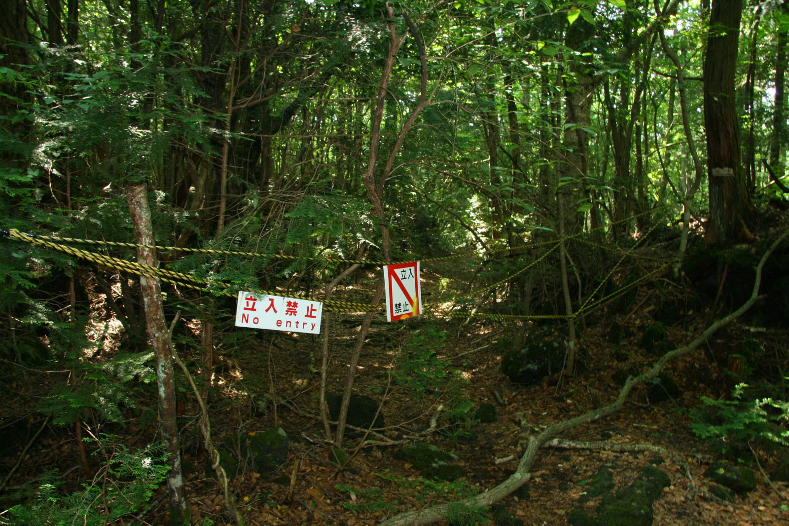 This Is The Dark Side Of Aokigahara Forest AKA The Suicide