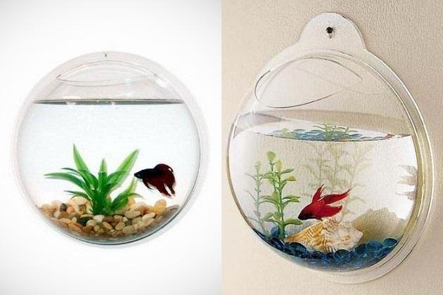 Wall mount fish bowl dj storm 39 s blog for Wall fish bowl