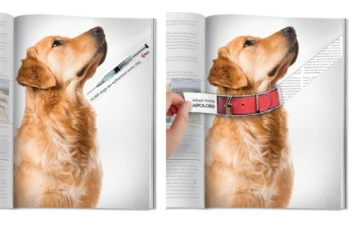 advertisment-marketing-branding-chicquero-aspca-adopt-a-dog