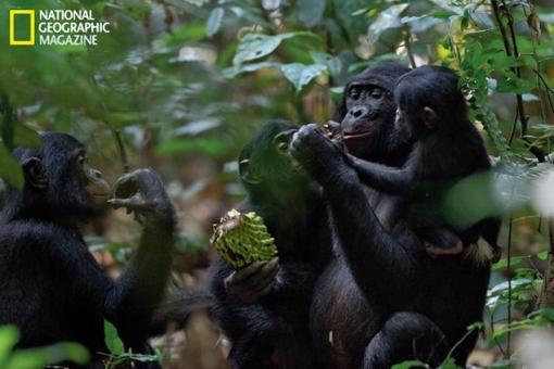 bonobos26n-2-web