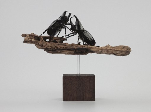 kebel-li-Beetles-on-a-branch-designboom-05