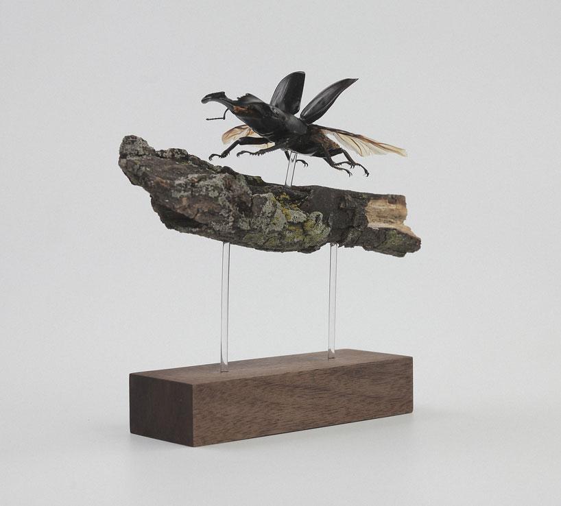 kebel-li-Beetles-on-a-branch-designboom-06