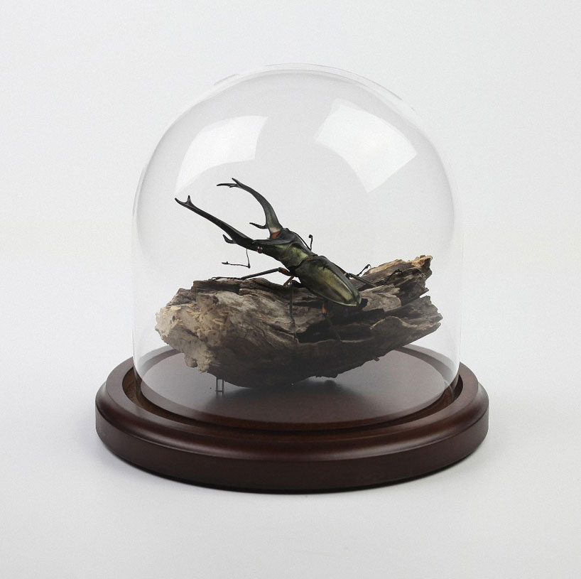 kebel-li-Beetles-on-a-branch-designboom-08