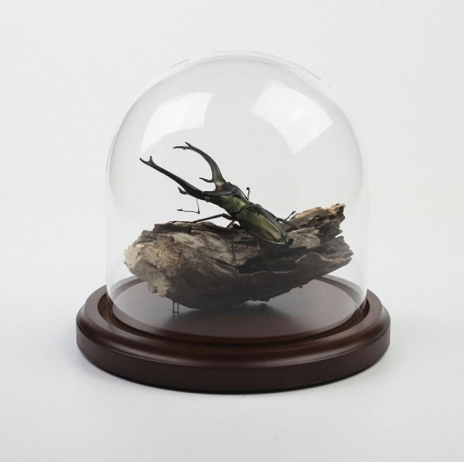 kebel-li-Beetles-on-a-branch-designboom-08