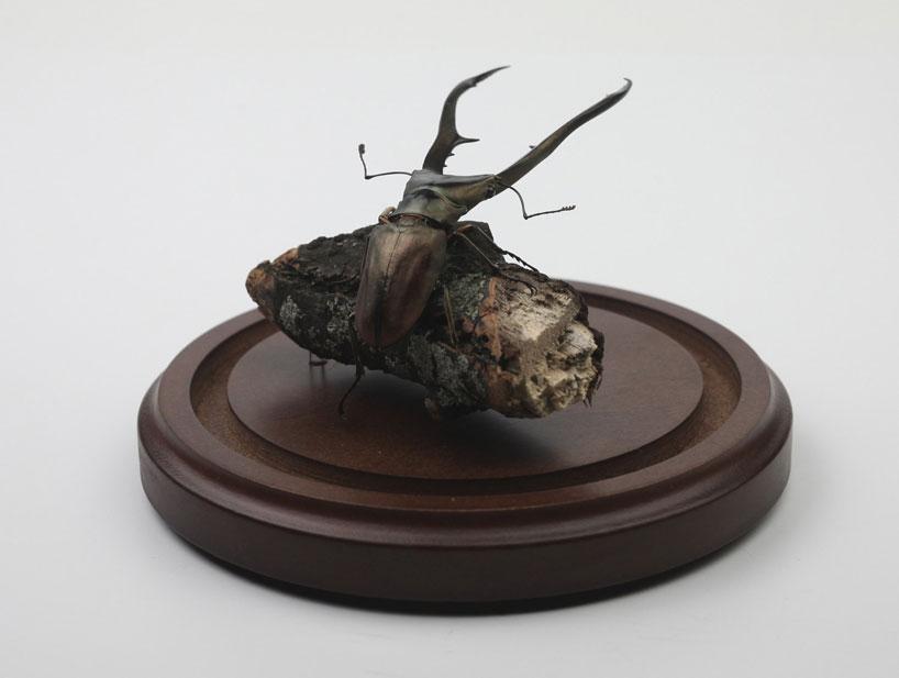 kebel-li-Beetles-on-a-branch-designboom-13
