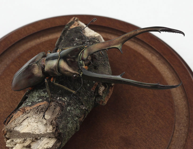 kebel-li-Beetles-on-a-branch-designboom-14