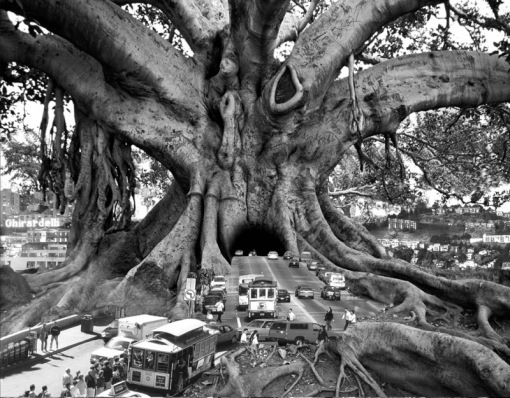 thomas-barbey-surreal-photography-chicquero-101