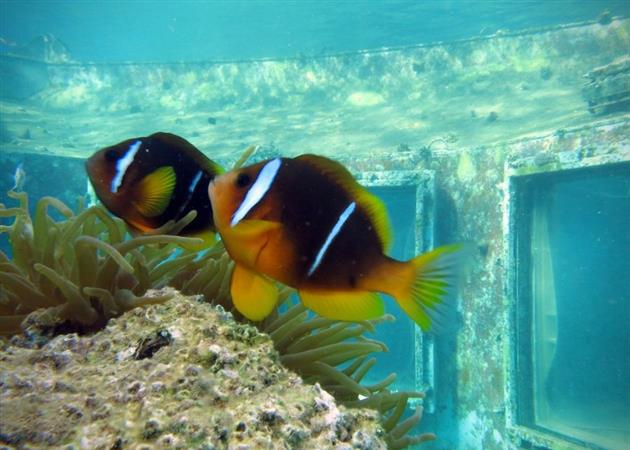 Abandoned-Underwater-Strip-Club-in-Israel-4