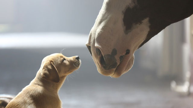 Budweiser-Puppy-Love-commercial